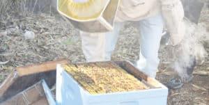 עבודה עם כוורות בקורס גידול דבורים בתל חי