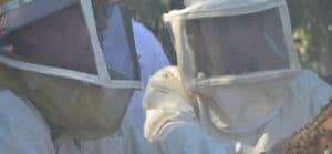 עבודה בחלק המעשי בקורס גידול דבורים בתל חי