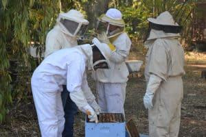 עבודה מעשית בקורס גידול דבורים