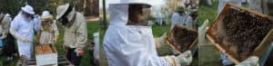 עבודה מעשית עם הכוורות בקורס גידול דבורים